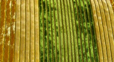 velours verts